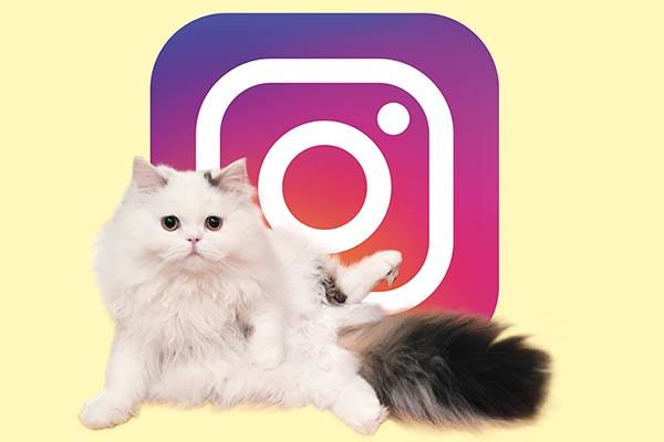 【新刊案内】「猫と楽しむニャンスタグラムのすすめ」記念無料フォトブックも配信中