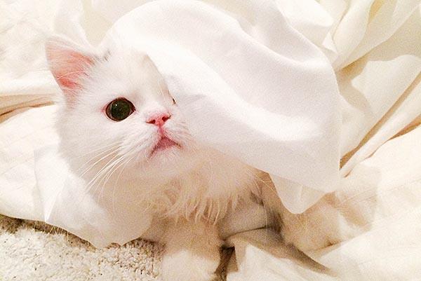 SNSの人気猫、まきゃべり君に聞く! 「Instagramで使えるテクニック」