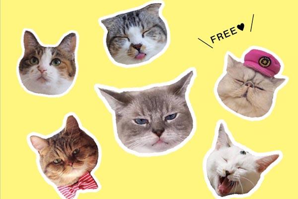 【ニュースリリース】7,000枚から選ばれた31枚の猫写真が電子書籍に! 「31cats ニャンとも愛しい毎日」が電子書籍ストアにて無料配信