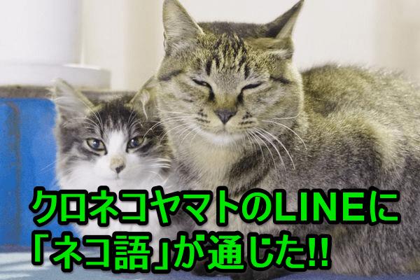 【ネコ好き集まれ!】クロネコヤマトのLINEと「猫語」で会話する方法(裏ワザ)