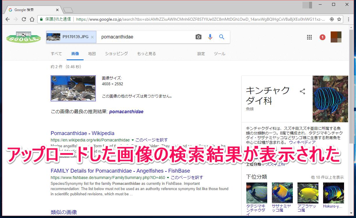 Google(グーグル)画像検索の検索結果画面