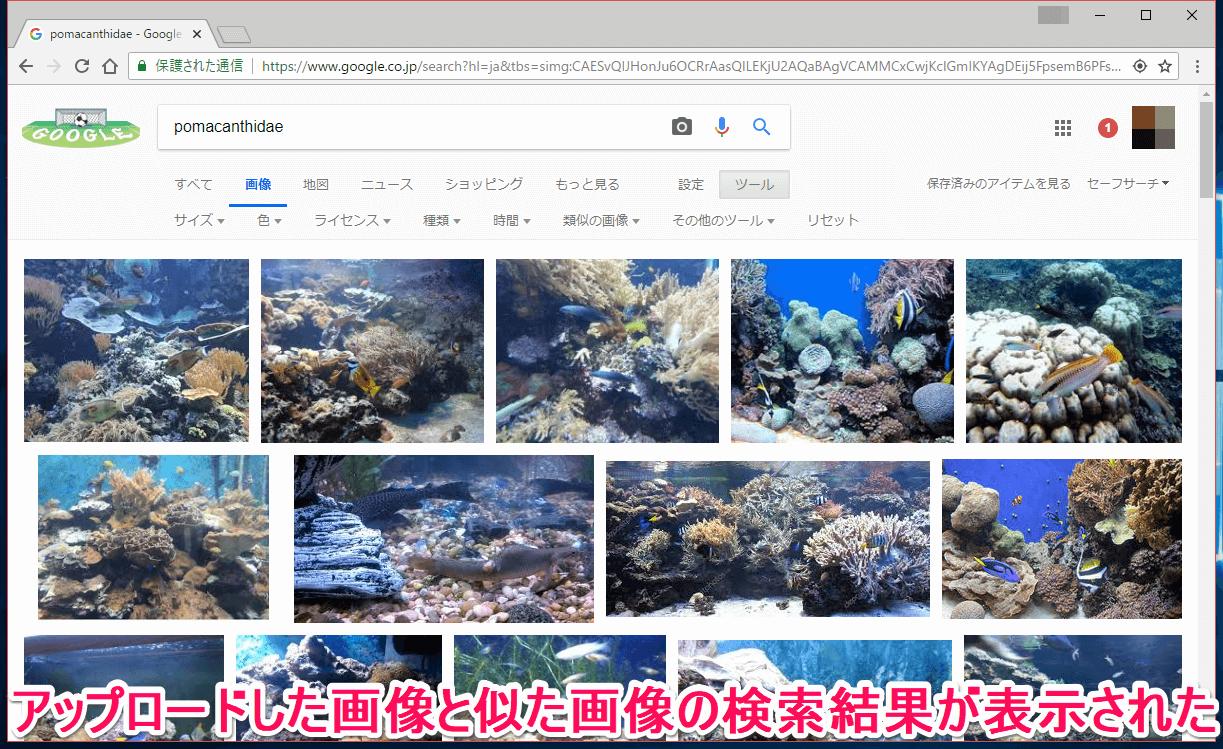 Google(グーグル)画像検索の類似画像検索の結果画面